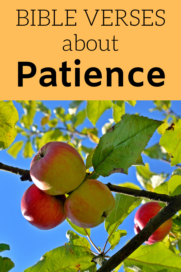 An image of a fruit tree reminds us Bible Verses About Patience asks us what kind of fruit we are bearing.
