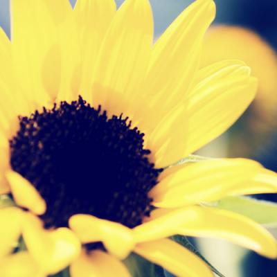 Women's Advent Devotional: Hope